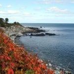 The Foliage of Long Island Sound