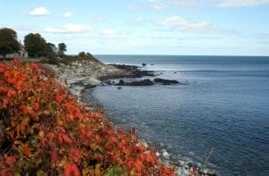 Foliage of The Long Island Sound